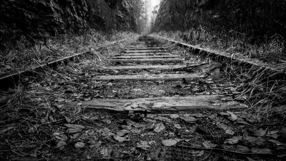 rail trail train grass black and white wood forest woods
