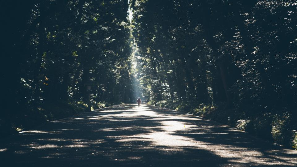 nature landscape forest trees leaves path street road man woman people sunlight shadow