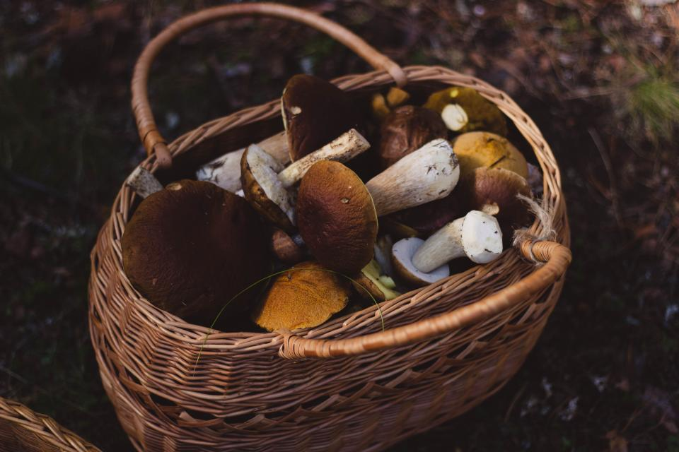 woven basket mushrooms nature outdoors forest