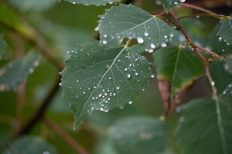 leaves rain droplets wet nature outdoors plants trees vegetation fresh spring texture green environment foliage patterns bokeh