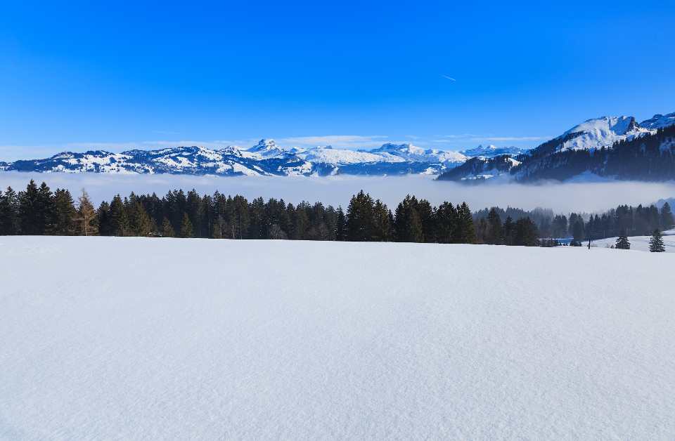 Switzerland Alps Swiss Alps nature landscape winter wintertime view Stoos Schwyz spruce tree green snow snowy white summit peak mountain mountain range slope cloud fog sky blue travel travel destination Swiss Europe