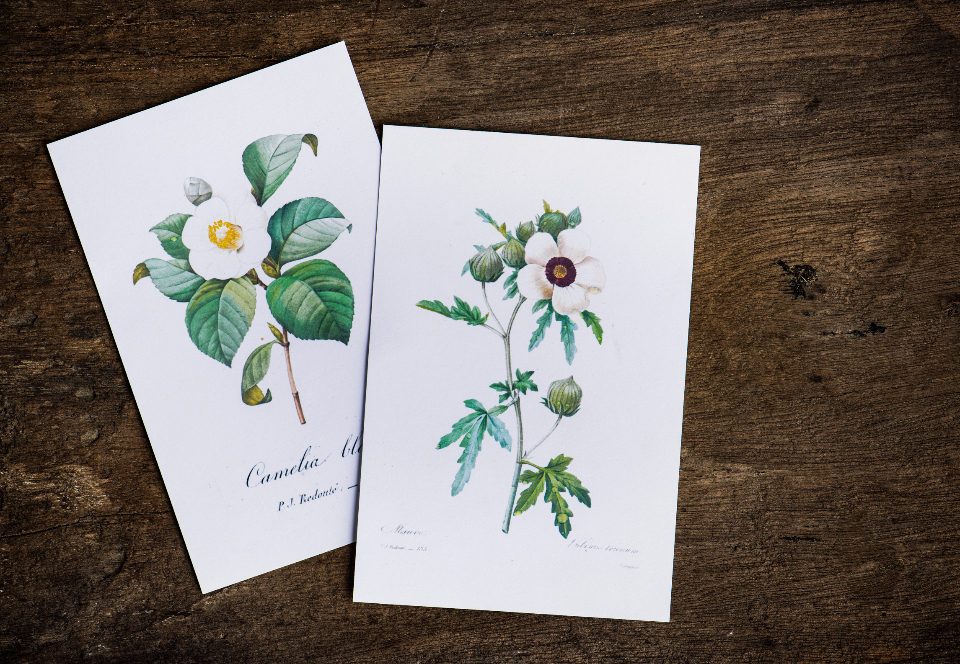 aerial artwork card closeup drawing flat lay flora flowers hand drawing isolated paper wooden table watercolor