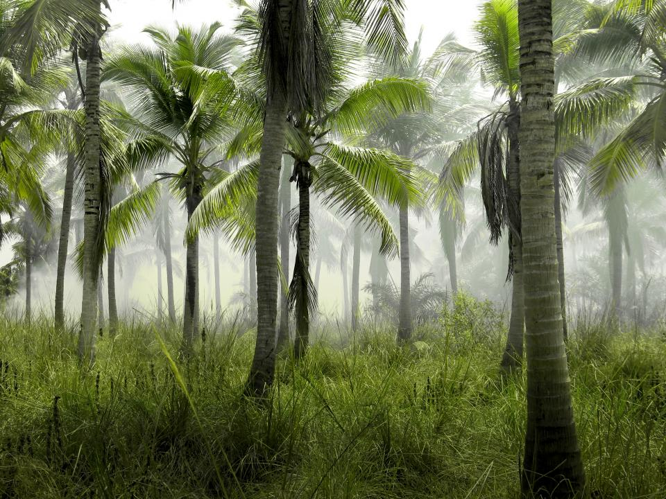palm trees jungle tropical green grass nature