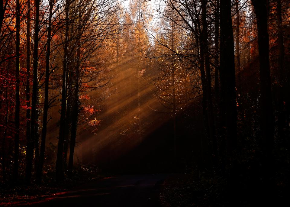 trees branch plant forest nature sunshine sunlight sunrise fall autumn