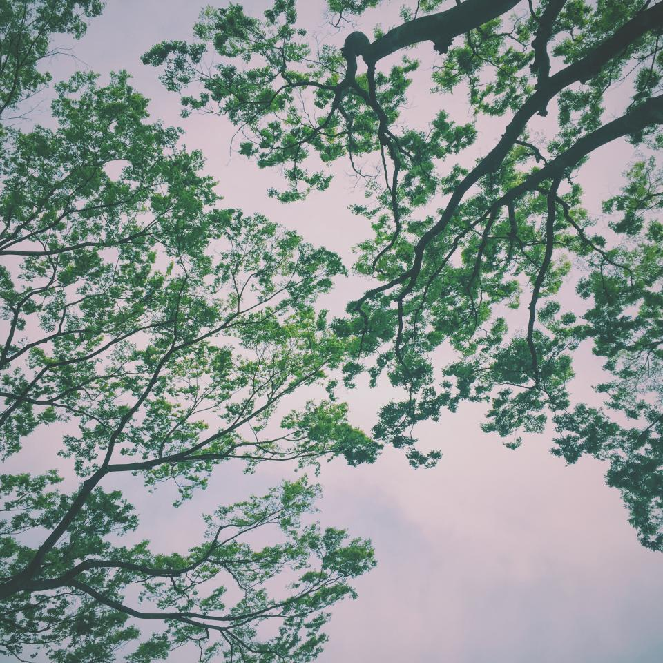 cloud sky green trees branch nature plants