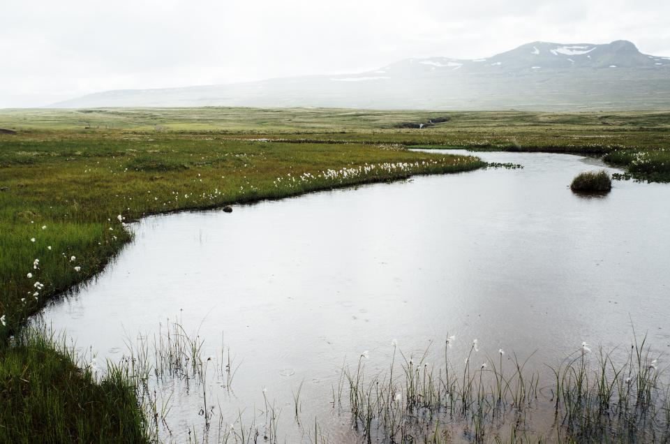 pond water nature outdoors mountains fields grass bushes flowers fog