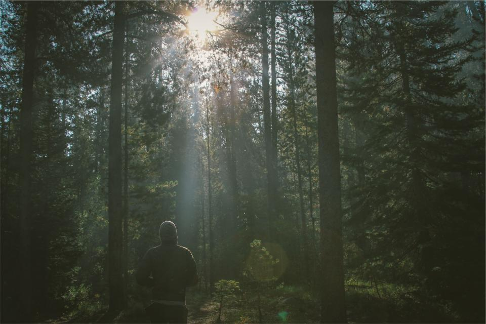 forest trees woods nature sunbeams sun rays walking jacket man guy