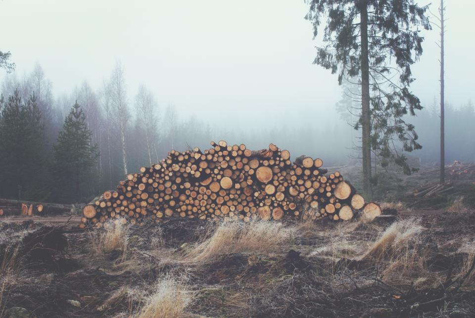 grey fog haze trees logs fields lumber grass