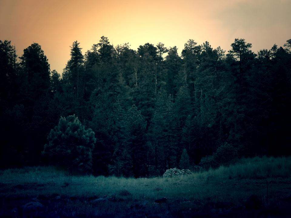 forest trees sunset