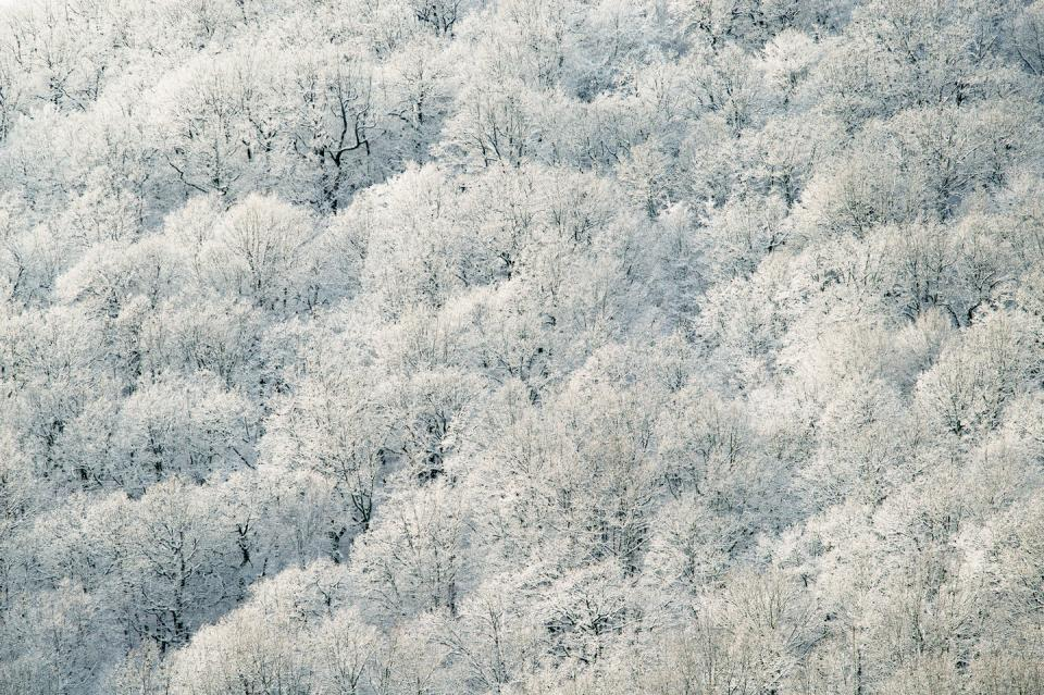 nature trees white leaves forest winter