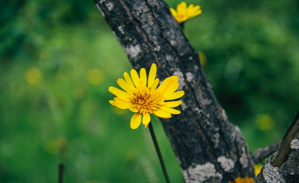 nature trees flowers bloom autumn fall yellow petals garden plant