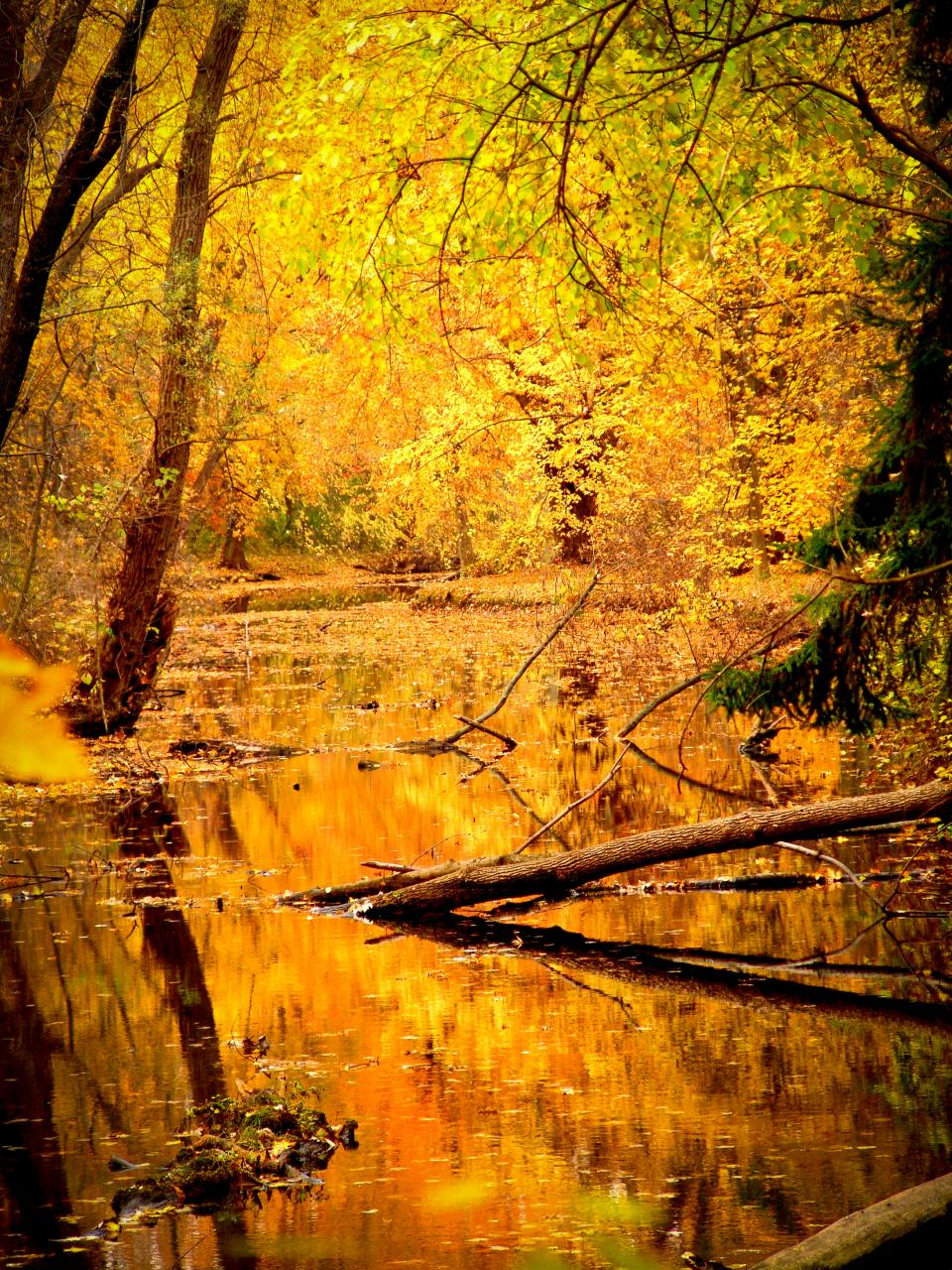 lake water trees forest woods nature branches leaves colors yellow autumn outdoors