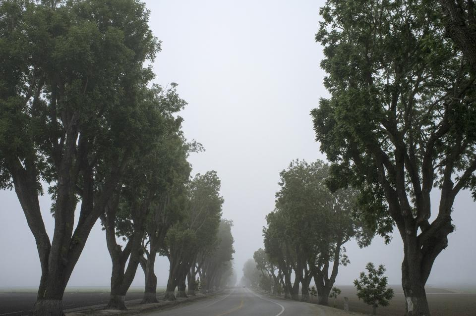 grey fog trees leaves road fields