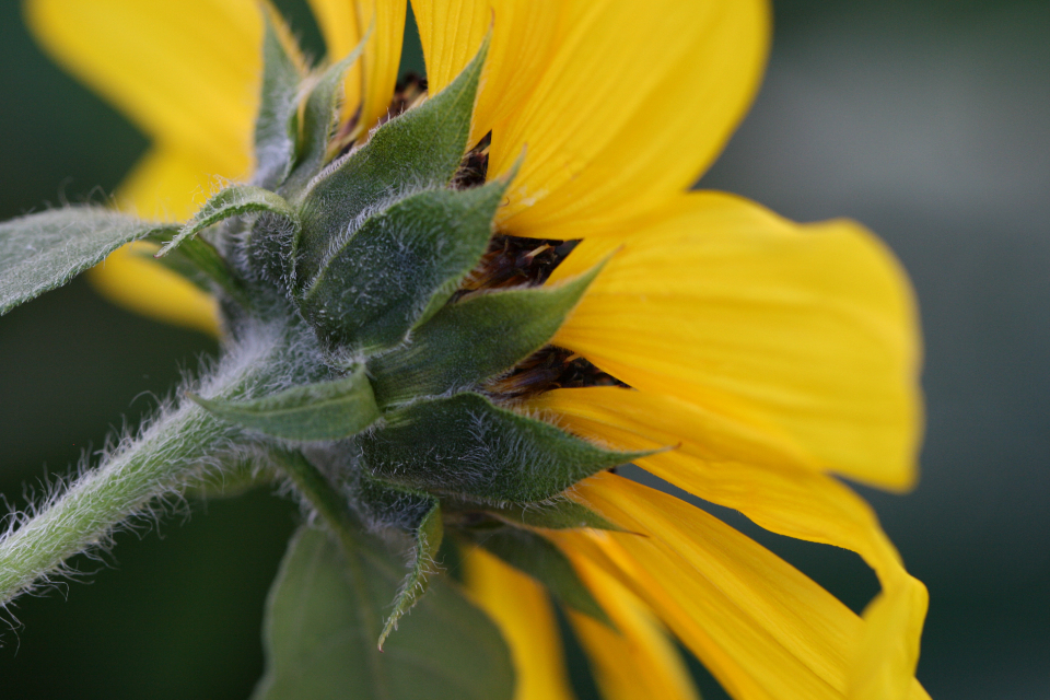 yellow flower close up garden fresh nature outdoors colorful organic natural plants green petals delicate