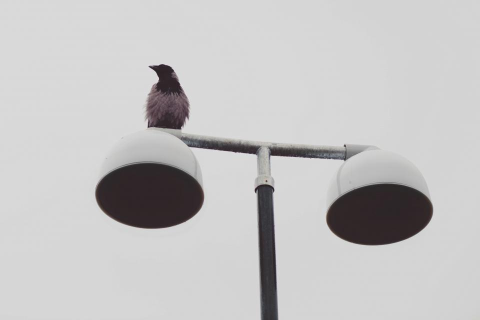 bird lamp posts animal