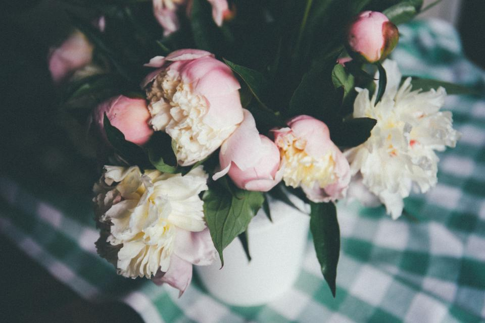 white pink petal roses flower plant nature table cloth