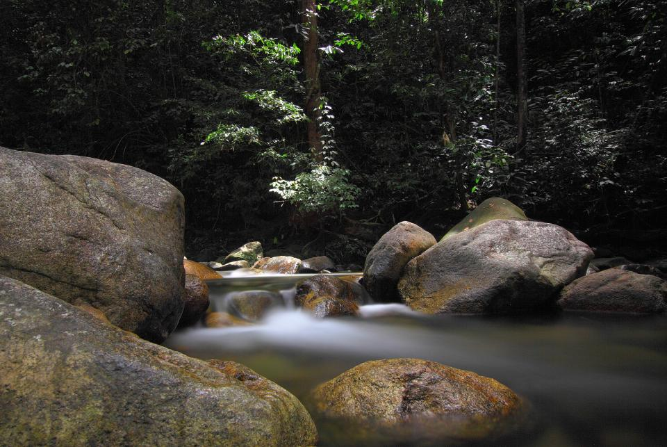 stream water green plant trees rock nature outdoor