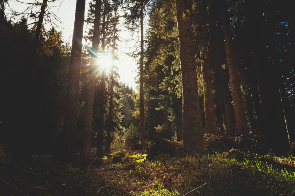 sunlight sunshine woods forest nature outdoors trees grass bushes dirt
