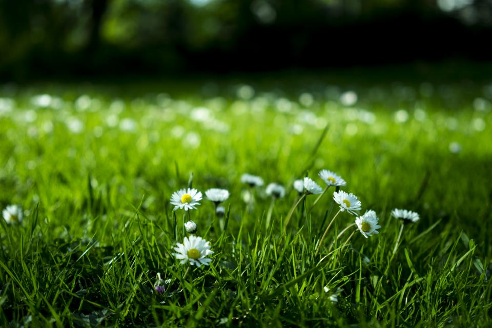 green grass grassland field lawn outdoor landscape nature beautiful flowers