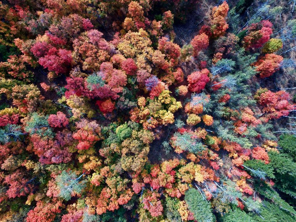 aerial trees woods forest drone green orange summer season fall autumn
