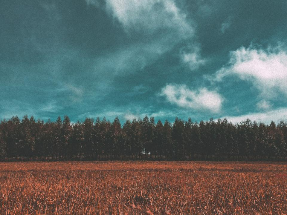 field crops agriculture nature landscape trees forest rural countryside blue sky clouds