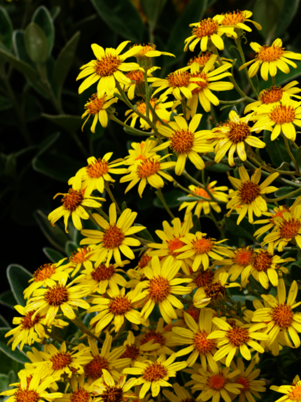 yellow flowers nature outdoors spring summer bloom plants garden wild flora floral daisies
