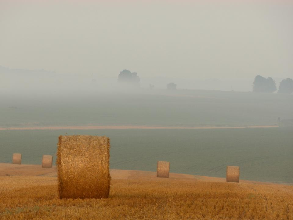 grey sky farm fields country hay grass trees fog mist