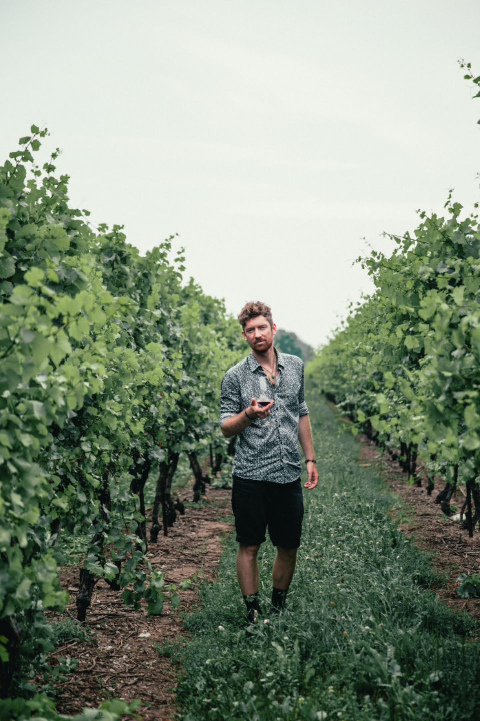 man wine vineyard nature outdoors person alcohol drink casual plants vegetation harvest agriculture countryside farm grape leisure male ripe rural summer taste