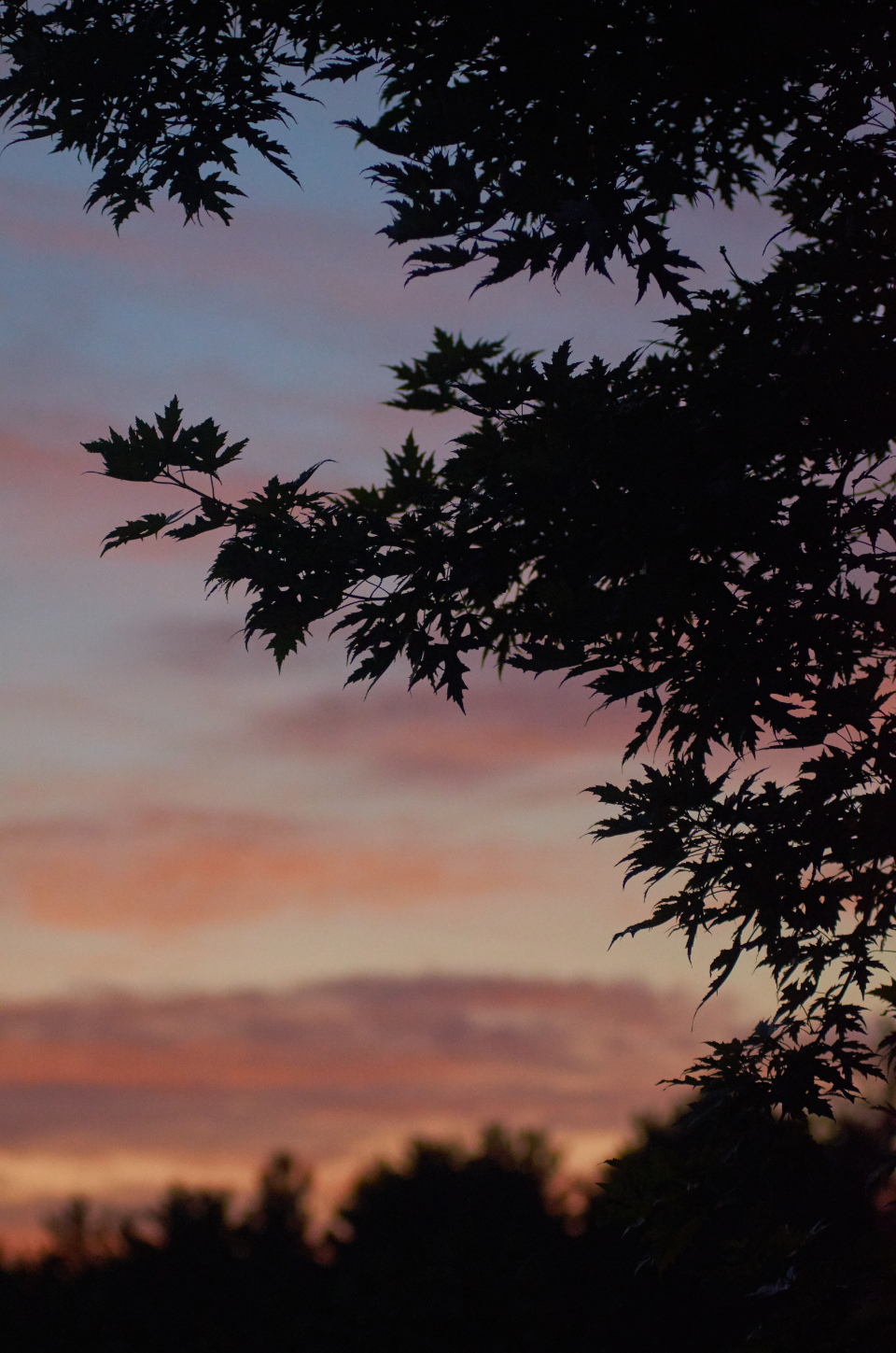 sunset trees sunrise vibrant clouds forest silhouette sky nature outdoors scenic view dusk