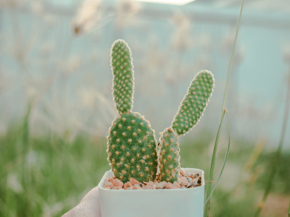 garden cactus plant green pot grass outdoors