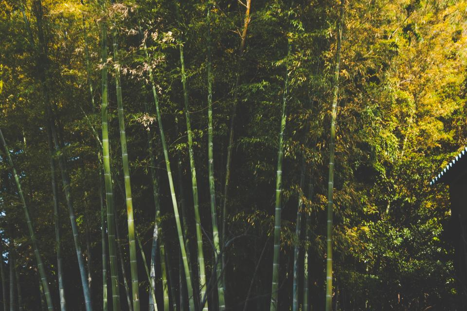 bamboo trees forest woods leaves branches nature outdoors park