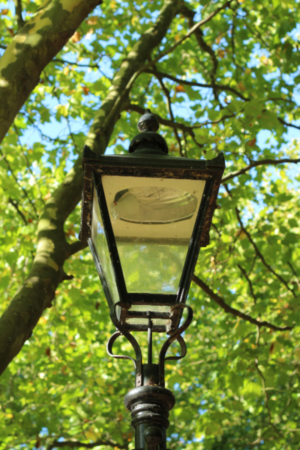 light lamp lamp post lampost vintage lamp old lamp lamp in park park trees leaves