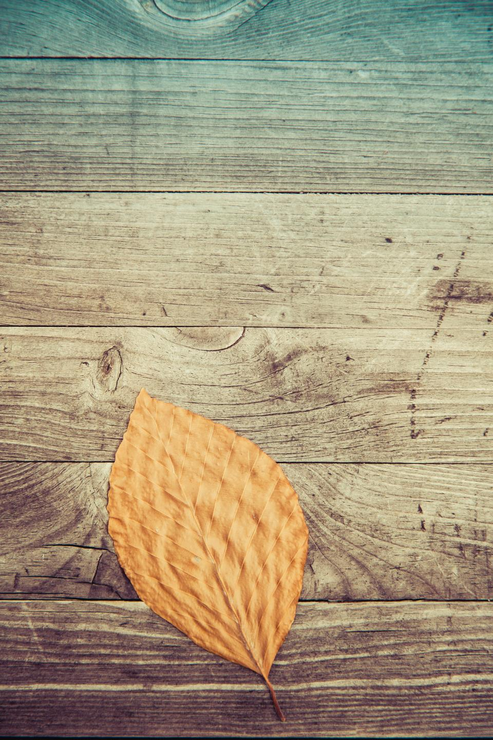 leaf fall autumn wooden pattern