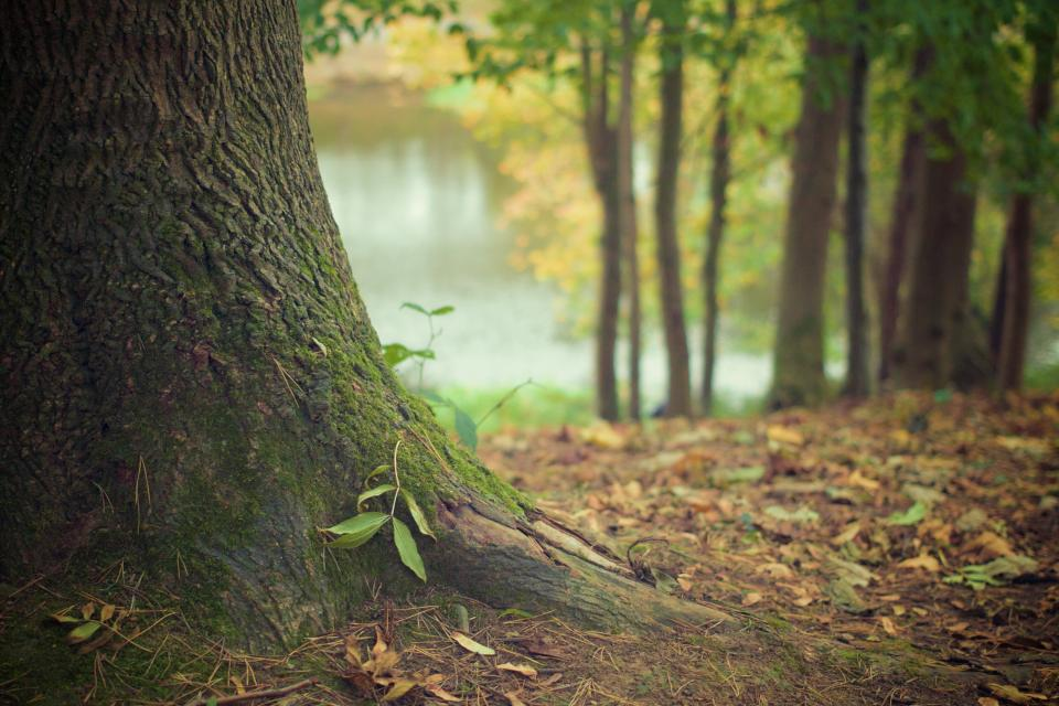 trees moss forest autumn leaves nature