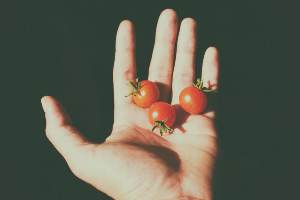 tomatoes tiny hand fruits food shadow lights