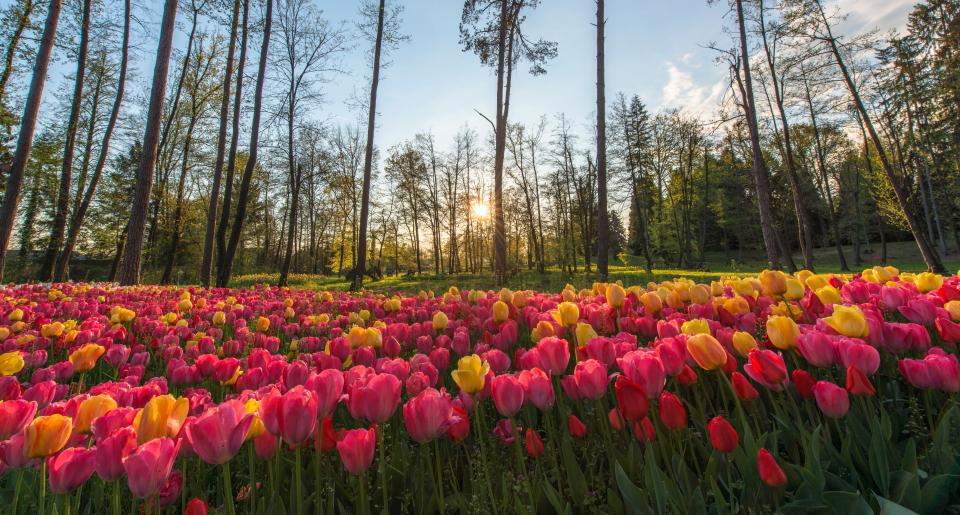 nature landscape trees field grass clouds sky sun sunny flowers rose petals pink yellow green