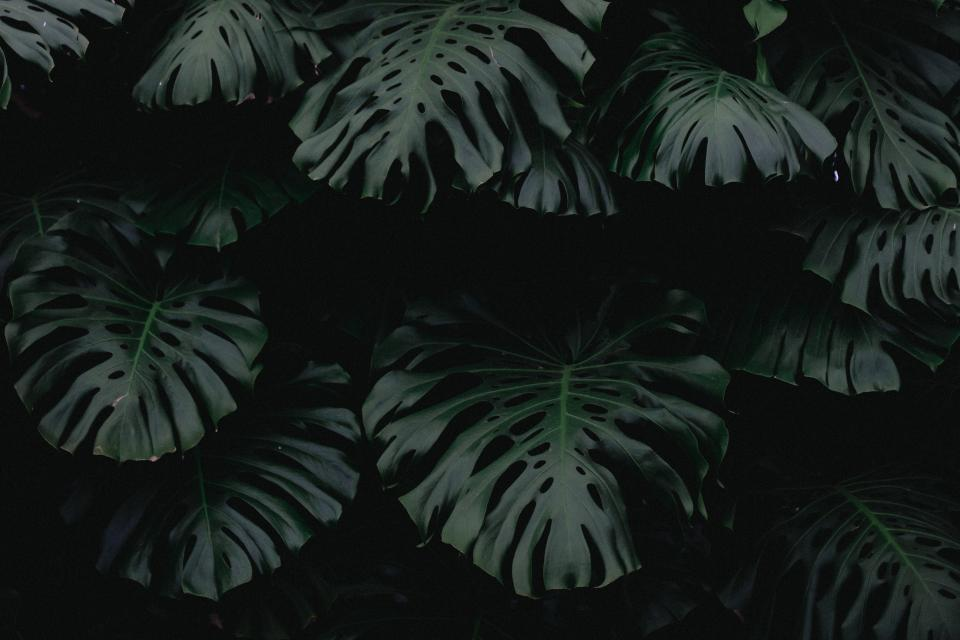dark green leaf plant nature blur outdoor