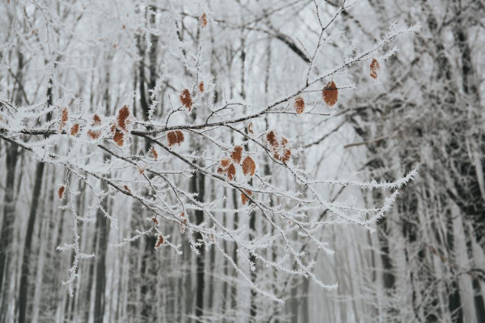 snow winter white cold weather ice trees plants nature leaves forest woods