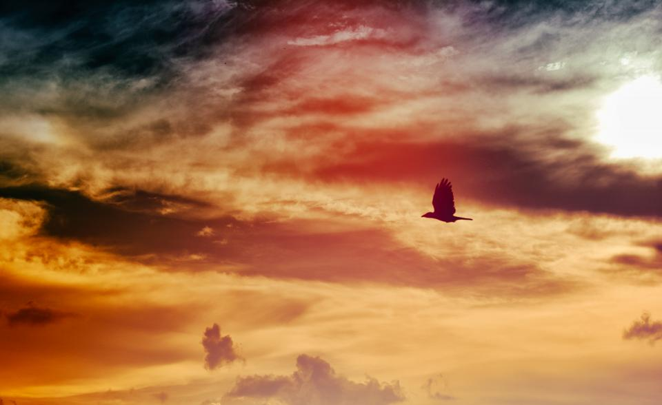 bird flying wings animal sky sunset dusk clouds sun silhouette