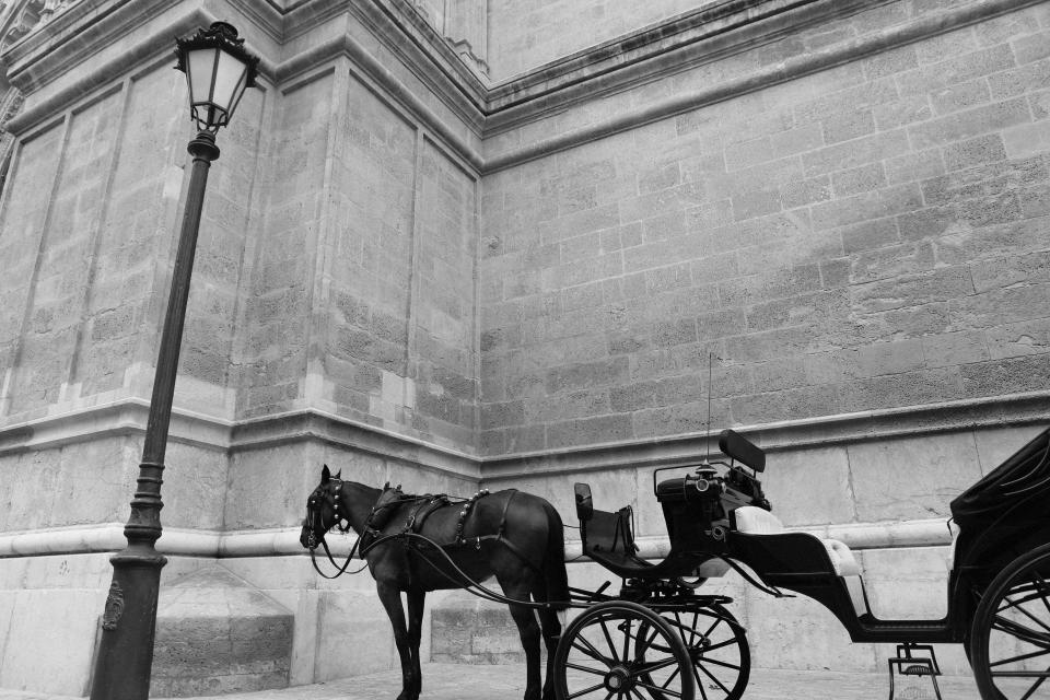 horse carriage transport vintage lamp post city building wall stones concrete black and white wheels