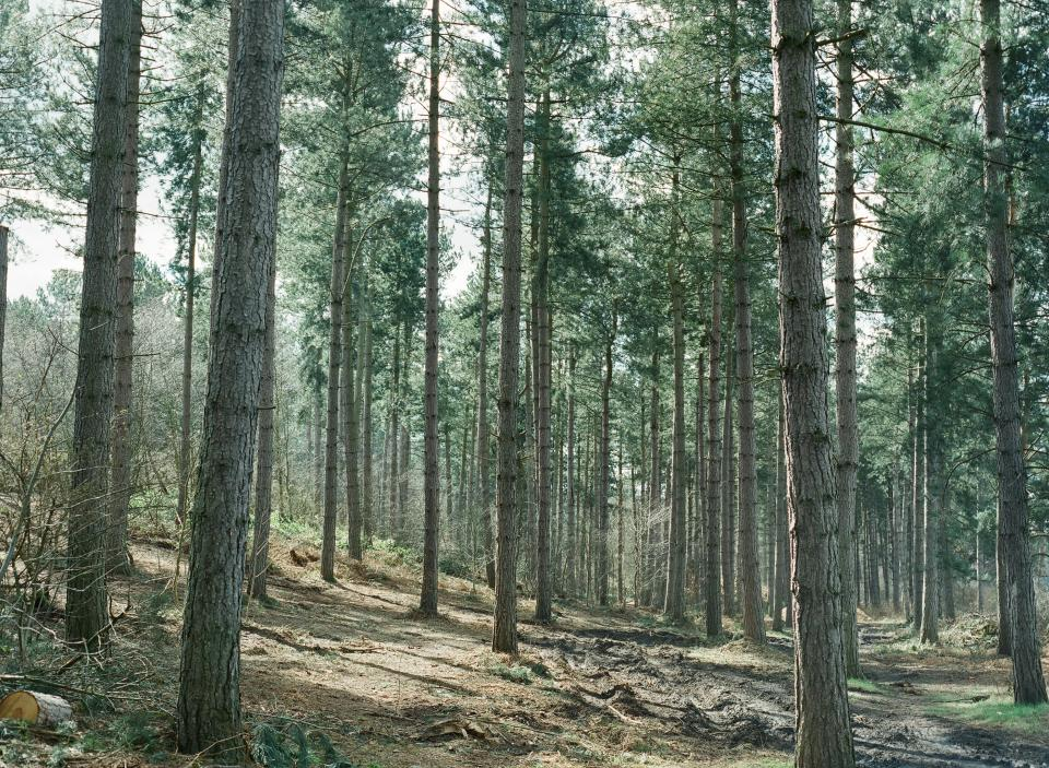forest trees woods nature outdoors