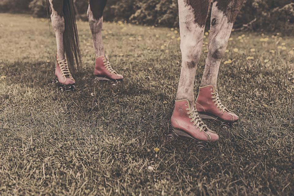horse animal legs shoes grass