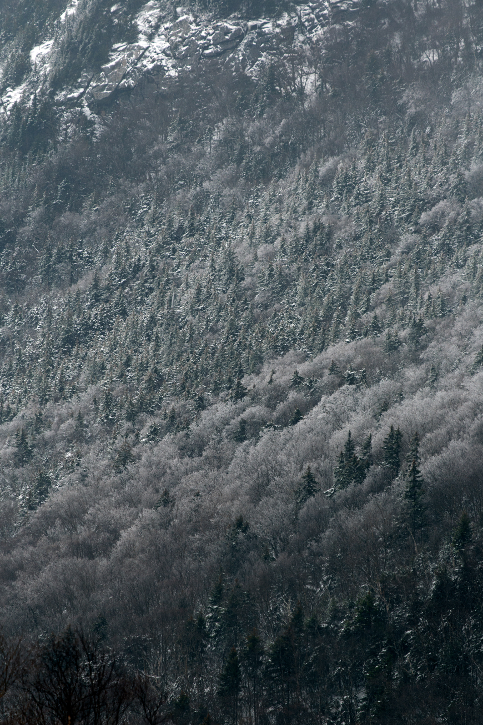 snow forest trees winter cold season nature outdoors landscape north climate mountain slope frost