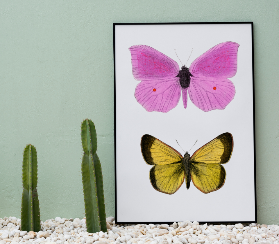 board cactus copy space decor design space frame home decor mockup paper paper board pastel present show space tags whiteboard butterfly