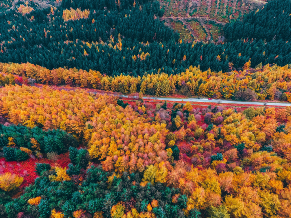 foliage aerial road colorful trees drone scenic fall seasonal natural pattern autumn landscape country forests travel above
