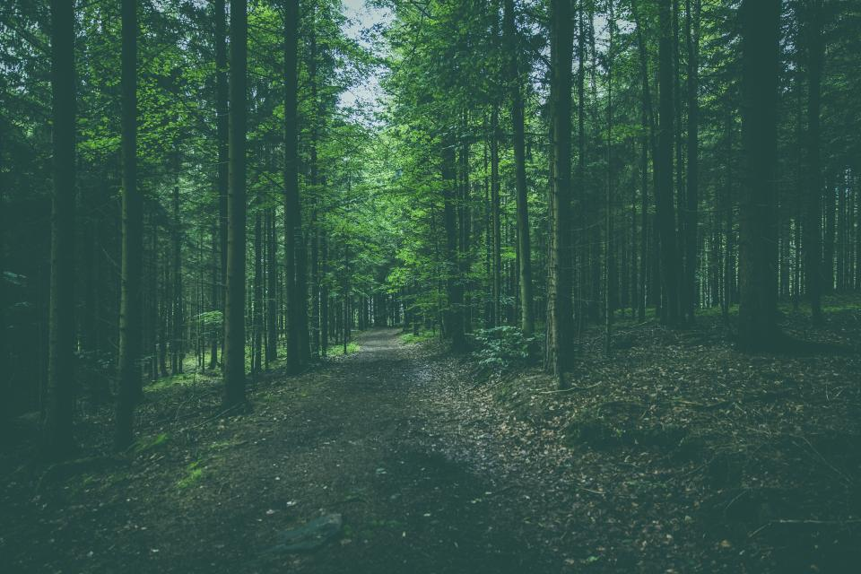 nature forests trees roads paths fallen leaves trunks branches park