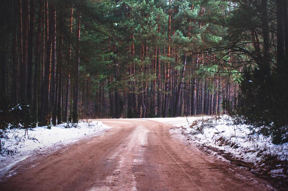 dirt road woods forest nature rural snow winter trees
