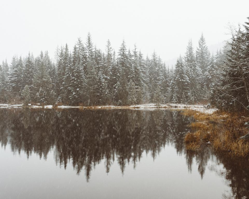 lake water reflection grass plant trees sky nature snow winter cold weather