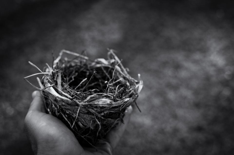 nest people man bird monochrome black and white