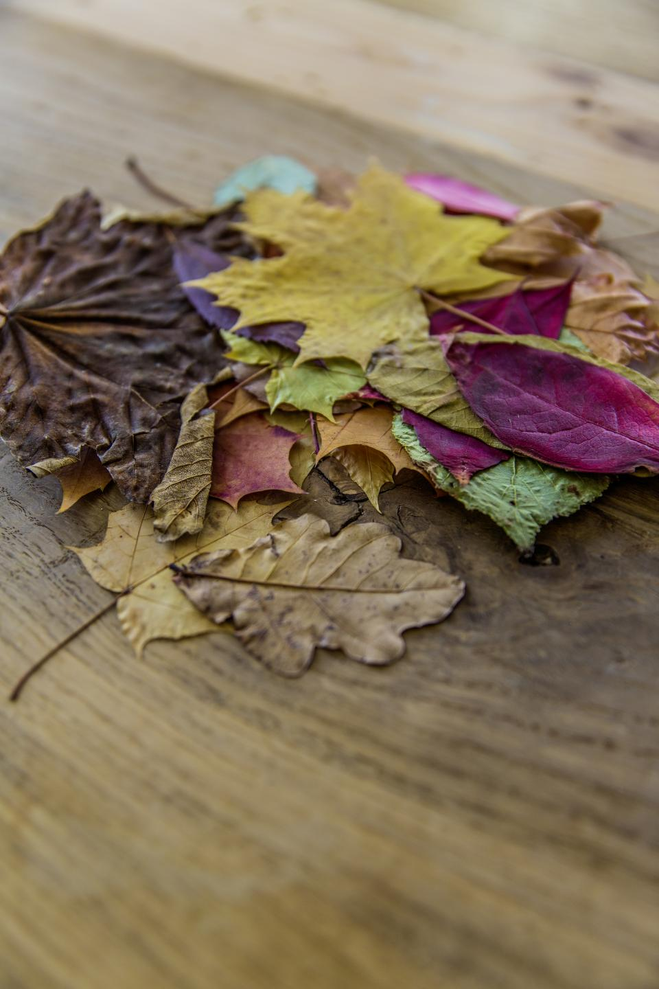 colorful leaf autumn fall wooden floor blur